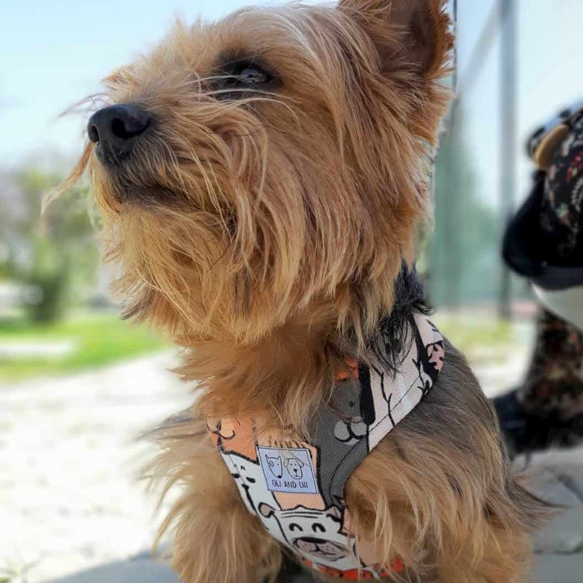 Oli and Lui Dog Harness